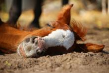 Sleeping (not dead!) horse image courtesy of Pixabay